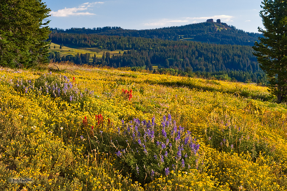Steamboat Springs,Rabbit Ears Pass,wildflowers, photo