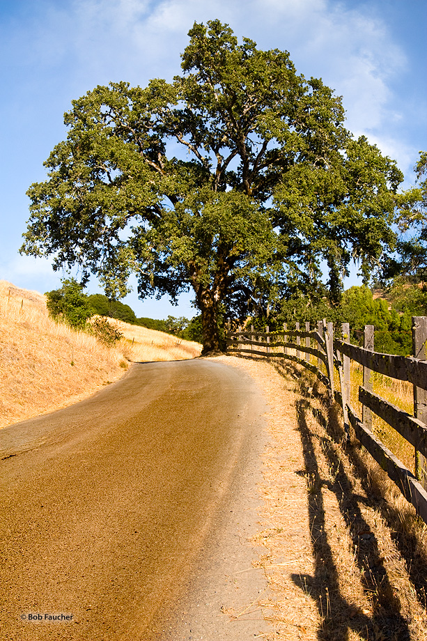 Oak tree,road,fence,Reeves Canyon,California, photo