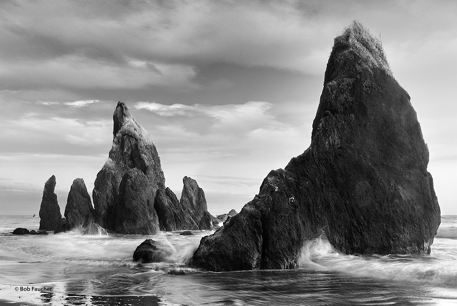 At low tide in the evening sea stacks are battered by the surf along the rugged Washington coast