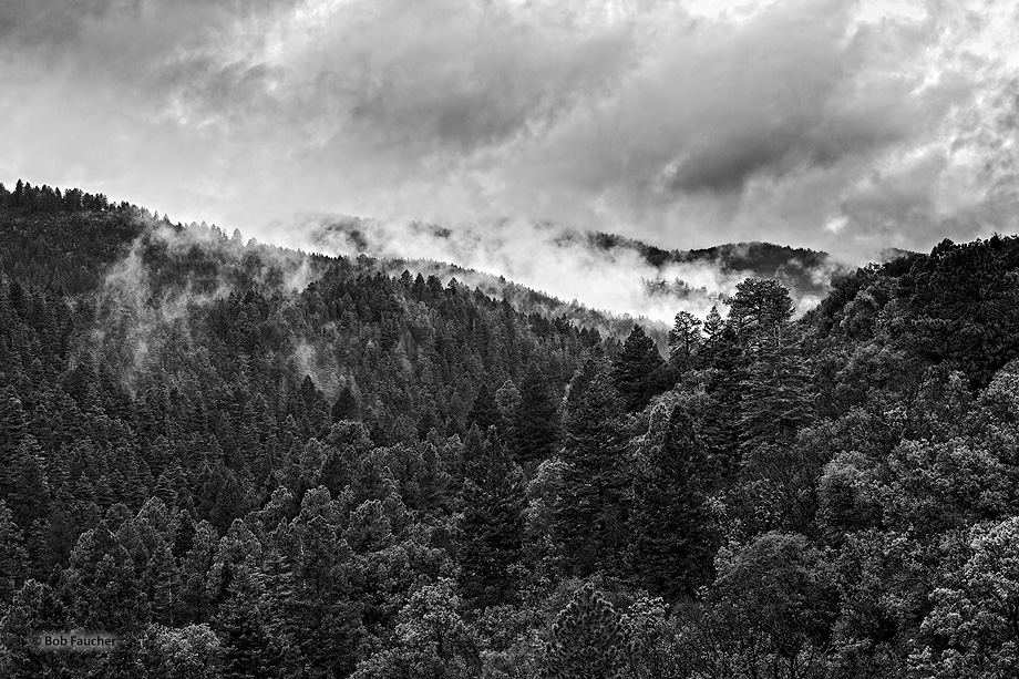 Lincoln NF,Sacramento mountains,heavy,low clouds, photo
