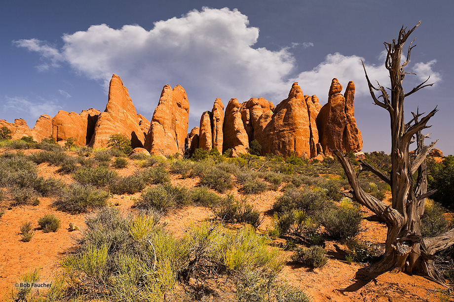 Arches NP,sandstone fins,juniper skeleton,clouds,Fiery Furnace, photo