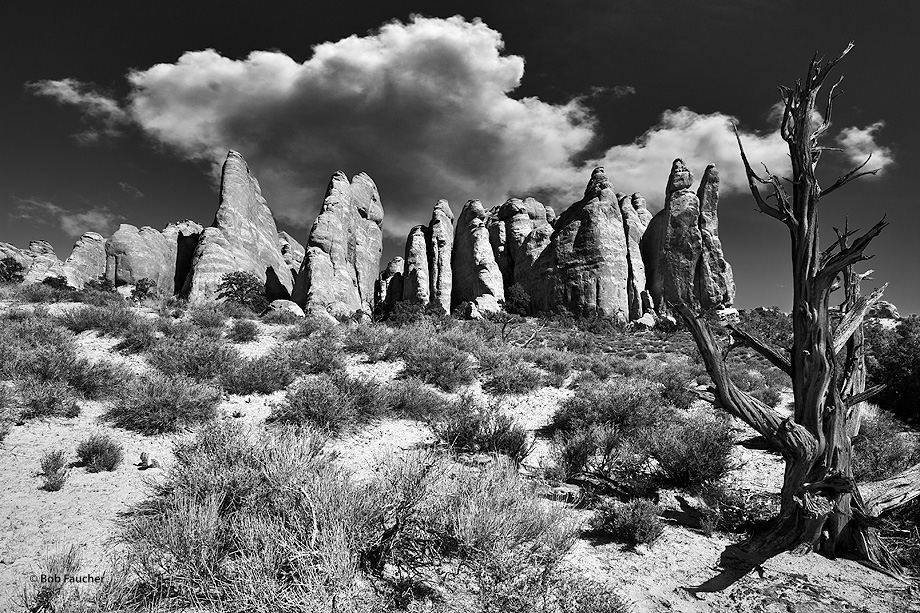 Arches NP,sandstone fins,juniper skeleton,clouds, photo