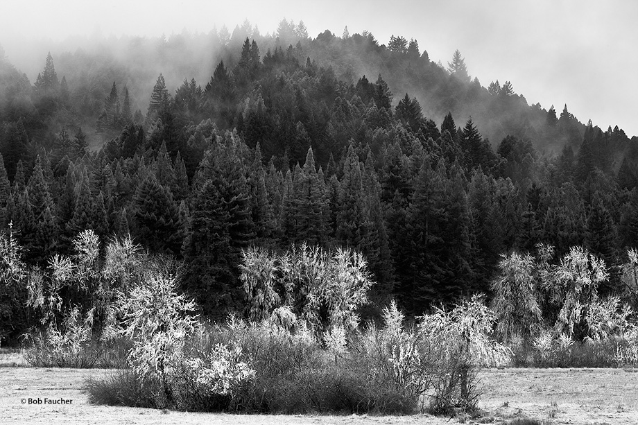 Sherwood Valley,fog,layers, photo