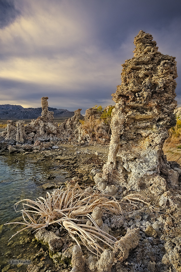 Early morning light on a tufa with the skeleton of rabbitbrush at it's base