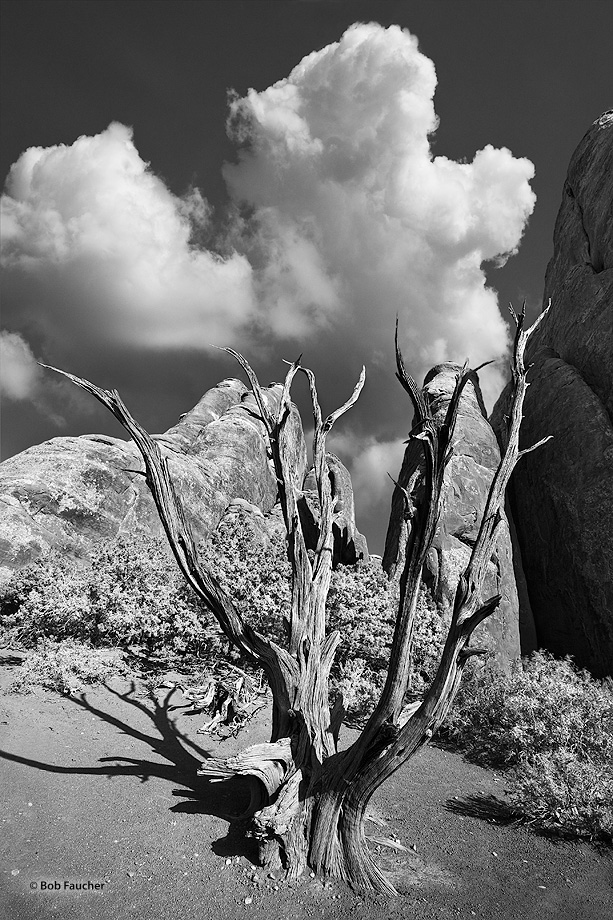 Cumulus clouds fill the desert sky at the entrance to the Fiery Furnace with a juniper snag guarding the sandstone fins that...
