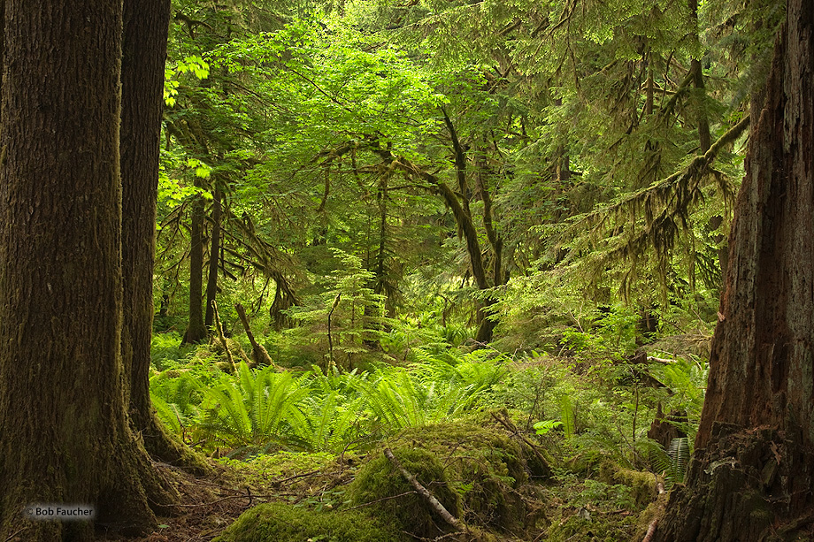 Old-growth features include diverse tree-related structures that provide diverse wildlife habitat that increases the bio-diversity...