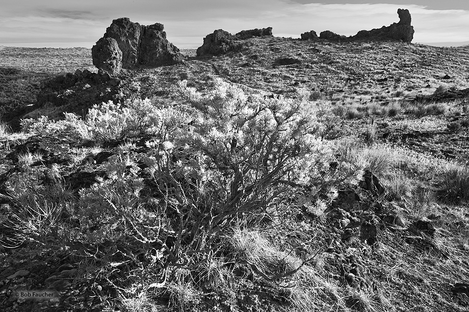 The dry, braided channels formed by glacial drainage of the scablands of eastern Washington provide shelter from wind to plants...