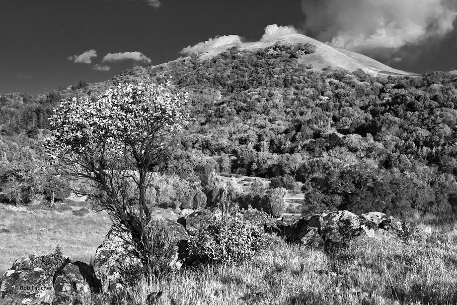 Sugarloaf Ridge,Sonoma, photo