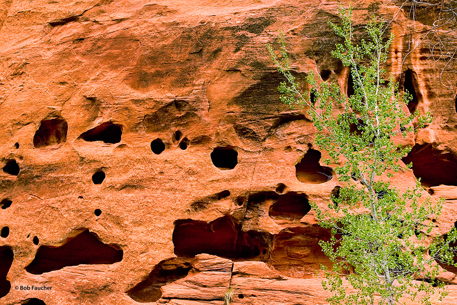 Erosion patterns in the sandstone walls of Long Canyon are often referred to as Swiss Cheese