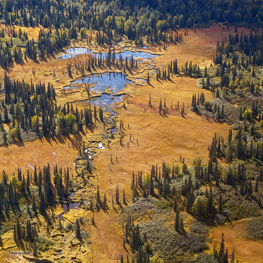 taiga,boreal forest,river,meander,aerial view,Denali NP,Alaska, photo