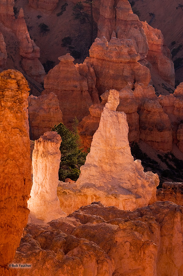 Two differently-shaped white hoodoos, surrounded by their red neighbors, share a moment in the morning sun.
