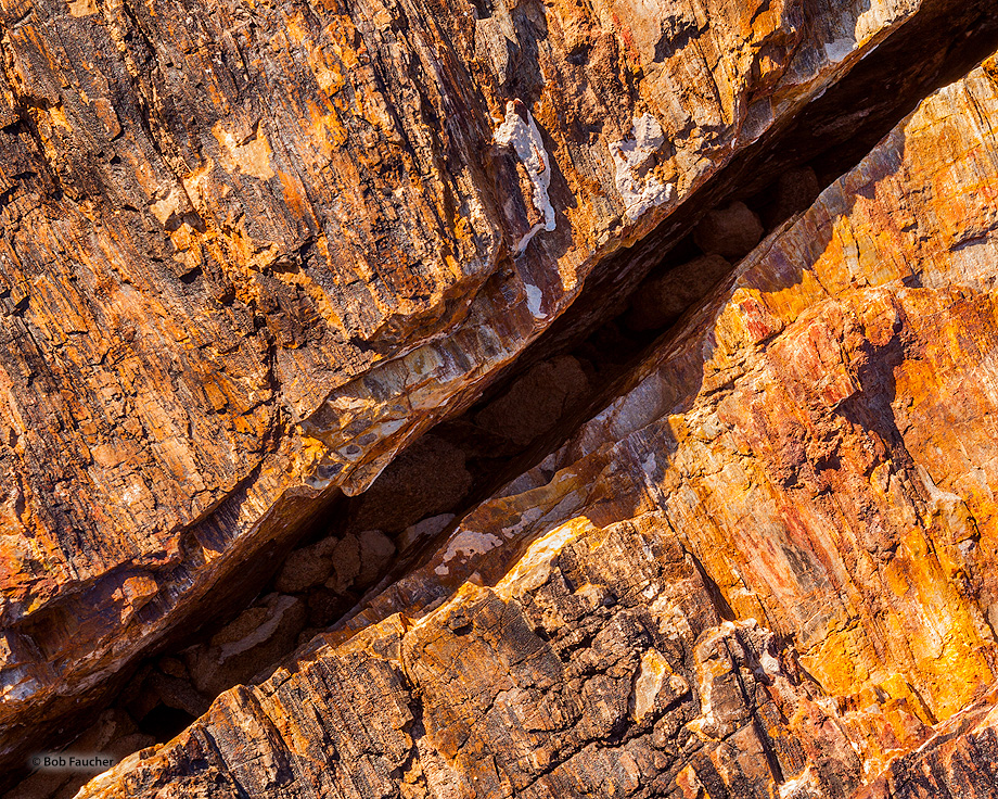 Valley of Fire SP,petrified log, photo