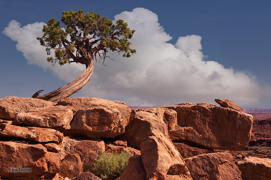 A juniper tree looks out over Monument Valley from its perch on a pile of boulders near Monument Pass.