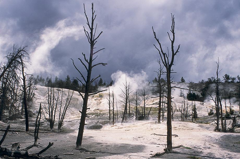 travertine,Mammoth Hot Springs,White Elephant Terrace,Yellowstone NP,snags; limestone, photo