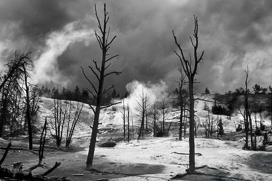 White Elephant Terrace,steam,pools,thermal features,Yellowstone NP, photo