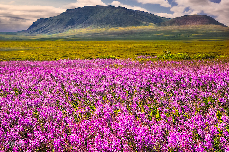 White Hills,Fireweed,Dalton Hiway,Alaska, photo