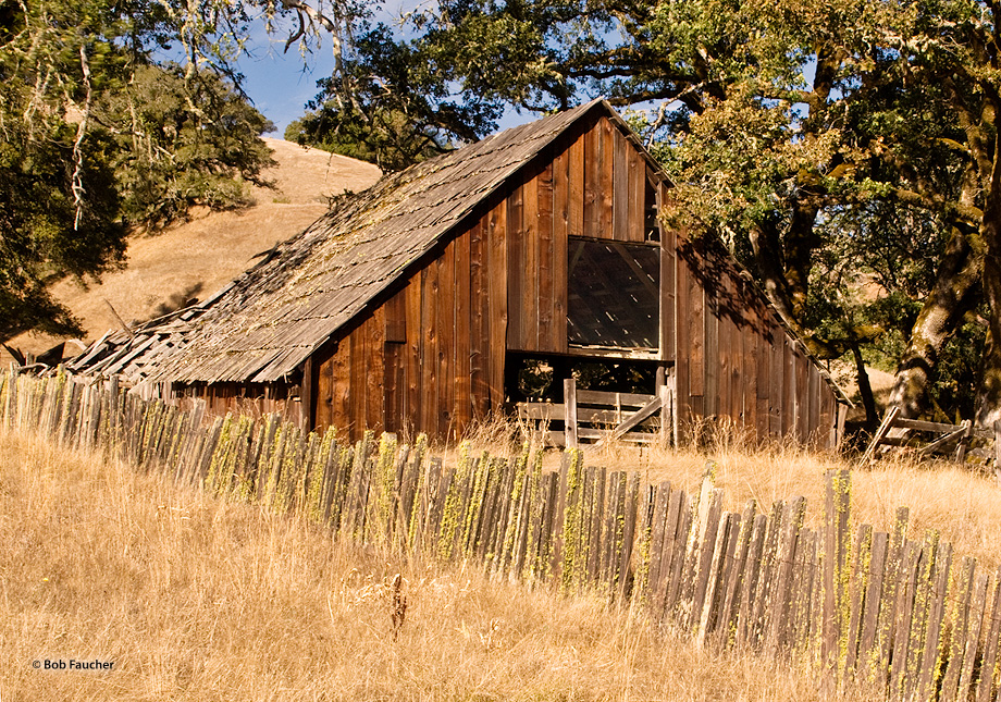 Derelict barn, along the Willits-to-Fort Bragg hiway, overshadowed by oak trees and overgrown with weeds, in afternoon light.